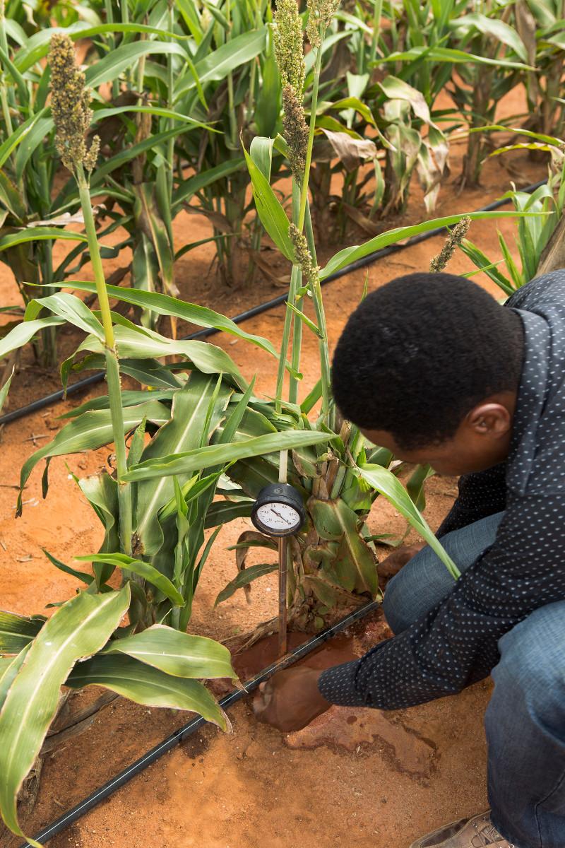 Biofuel potential in Sub-Saharan Africa: Raising food yields
