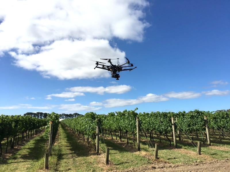 New high-tech drones target Australian vineyards to help