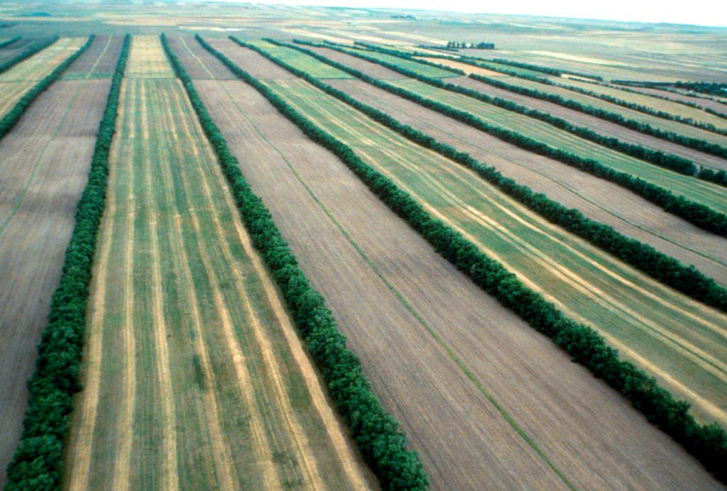 Vue aérienne de brise-vent (crédits: USDA / Flickr Creative Commons Attribution 2.0 Generic (CC BY 2.0))