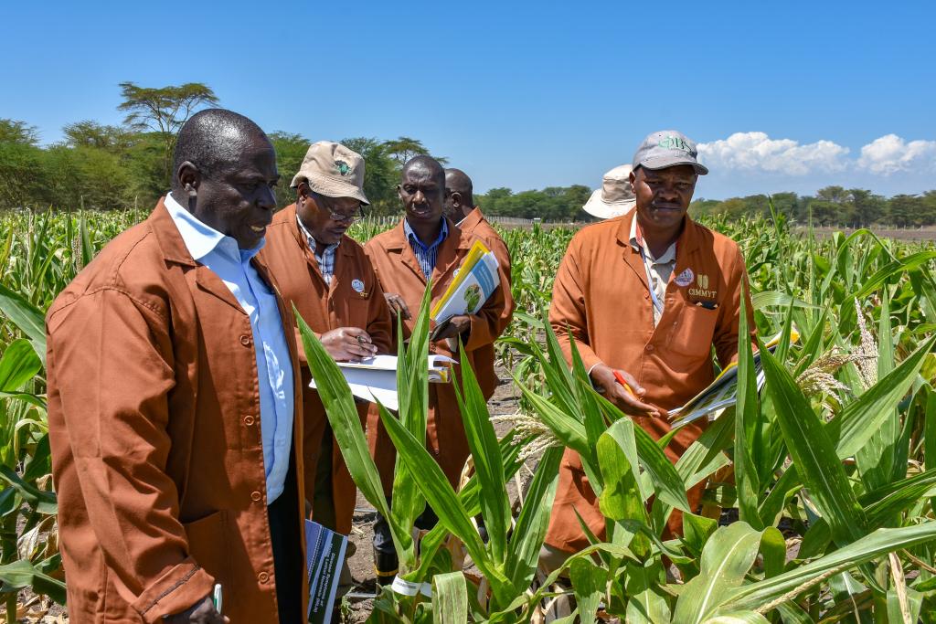 Les visites sur le terrain dans les stations de recherche de Kiboko et de Naivasha ont consisté à évaluer diverses innovations en matière d'amélioration des cultures et d'agriculture, notamment la technologie du double haploïde, le dépistage de la nécrose létale du maïs et les pratiques d'intensification durable. Les participants ont également eu l'occasion d'interagir avec une nouvelle plate-forme numérique de qualité des semences appelée SeedAssure et d'évaluer de nouvelles variétés hybrides de maïs. (crédits: Joshua Masinde / CIMMYT / Flickr Creative Commons Attribution-NonCommercial 2.0 Generic (CC BY-NC 2.0))