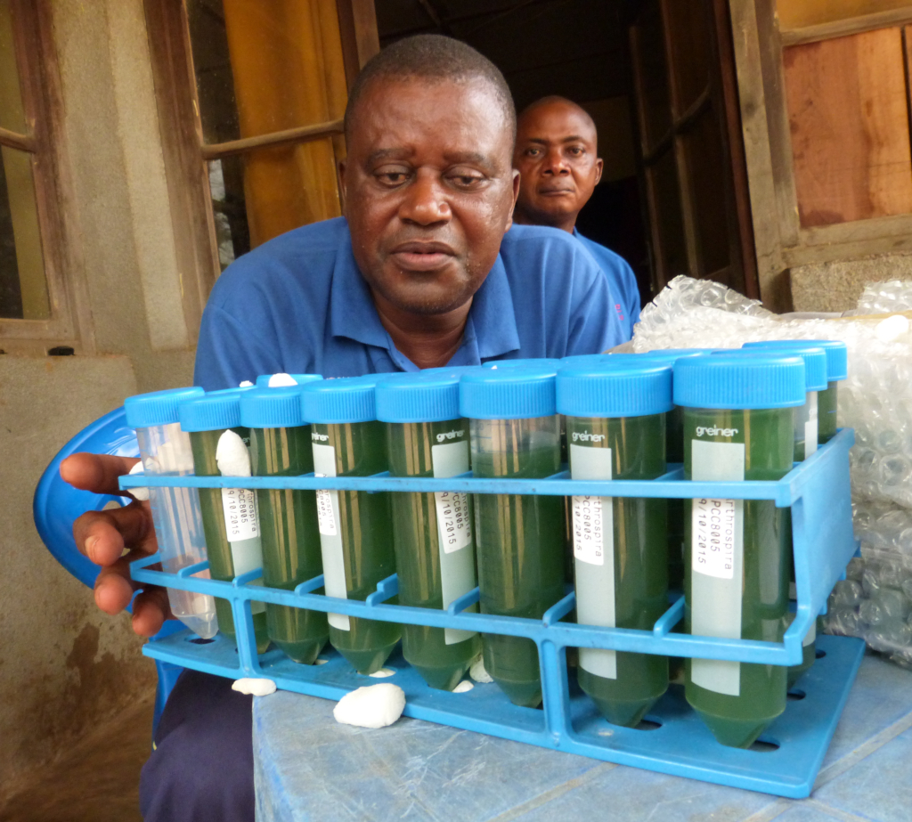 A project in Congo is looking at growing spirulina as the staple diet in the Congo town of Bikoro is cassava, which supplies very little protein. Spirulina could supplement the local diet with much-needed protein as well as vitamin A and iron. Copyright SCK·CEN