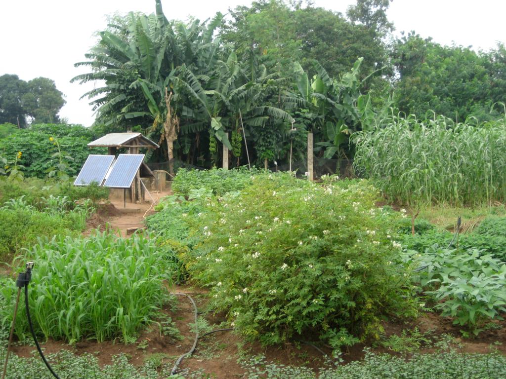 Système d'irrigation à énergie solaire (crédits: Christine Prefontaine / Flickr Creative Commons Attribution-ShareAlike 2.0 Generic (CC BY-SA 2.0))