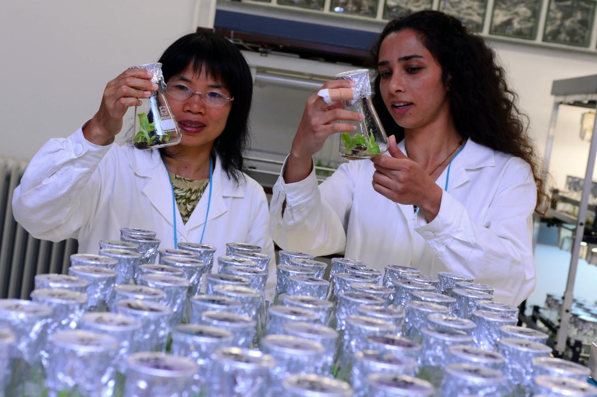 Les scientifiques de l'unité de sélection des plantes de l'AIEA (crédits: Dean Calma / IAEA / Flickr Creative Commons Attribution-ShareAlike 2.0 Generic (CC BY-SA 2.0))