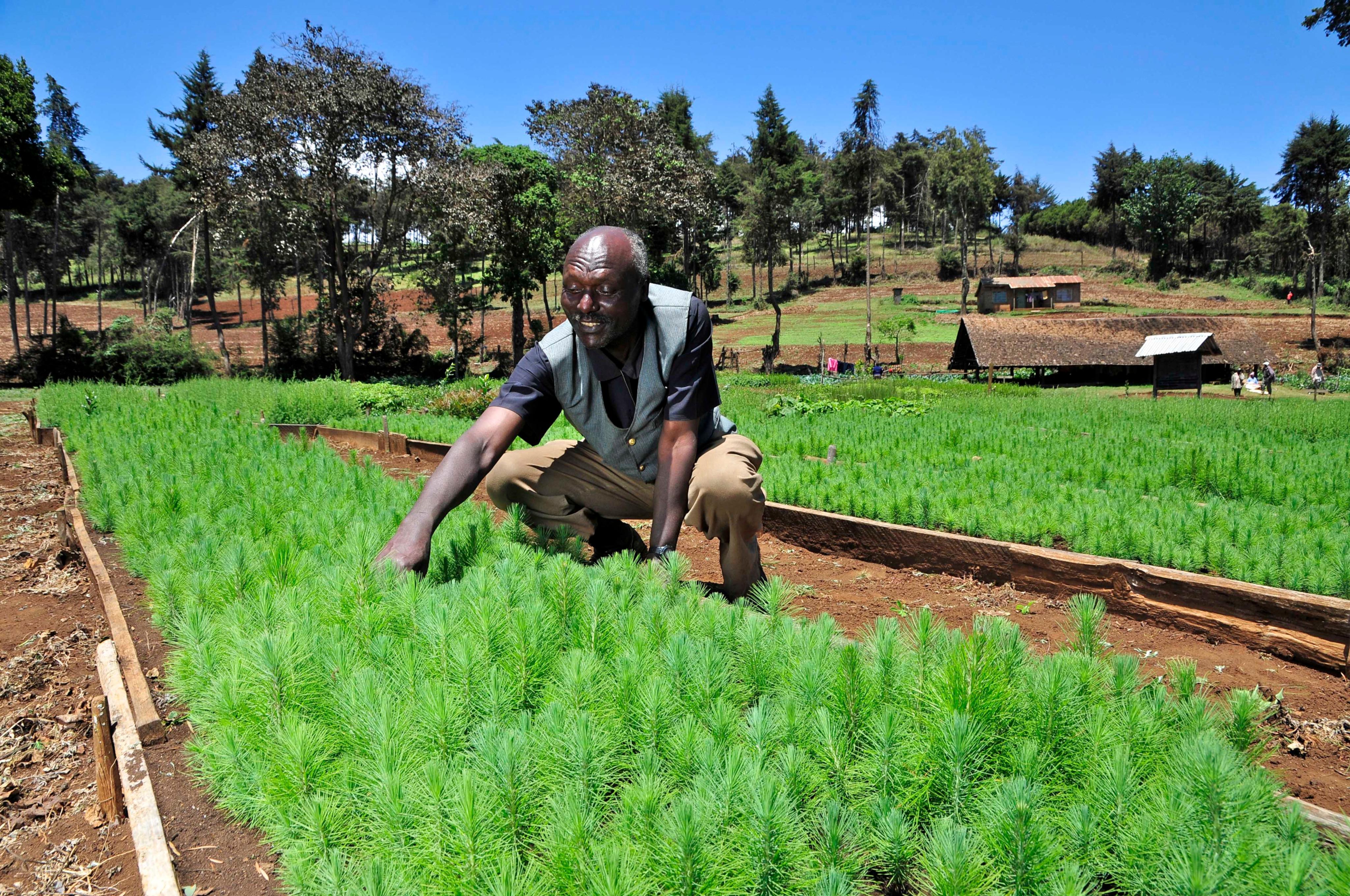 Le projet Two Degrees Up examine l'impact du changement climatique sur l'agriculture dans la région du mont Kenya (crédits: CIAT / Flickr Creative Commons Attribution-ShareAlike 2.0 Generic (CC BY-SA 2.0))
