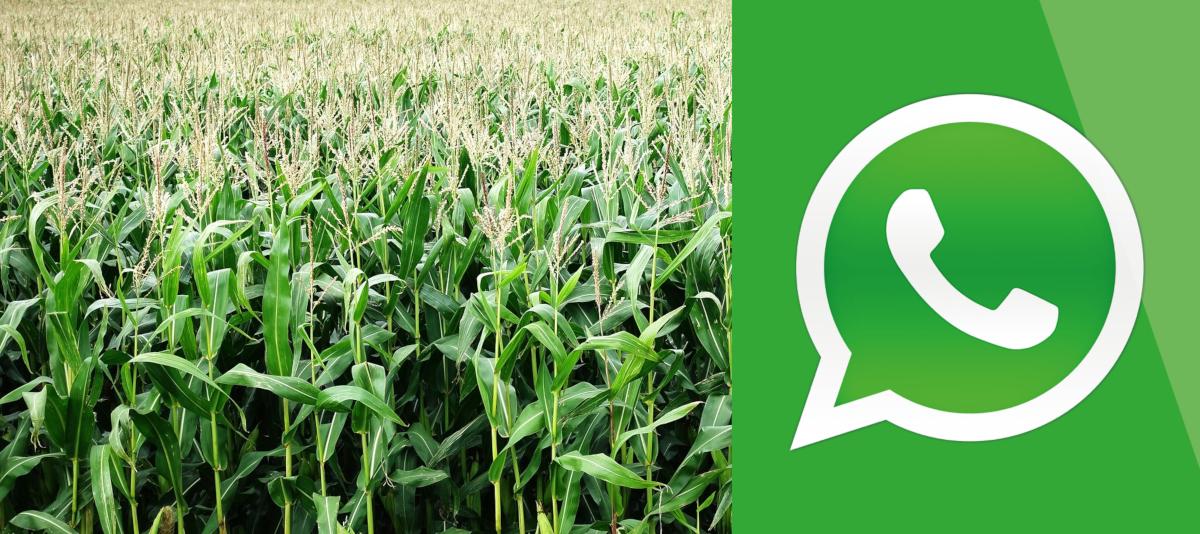 Groupe WhatsApp dédié aux Appels à projets et aux Subventions pour l'Agriculture, l'Aquaculture, l'Agroalimentaire, l'Agritech et l'Élevage