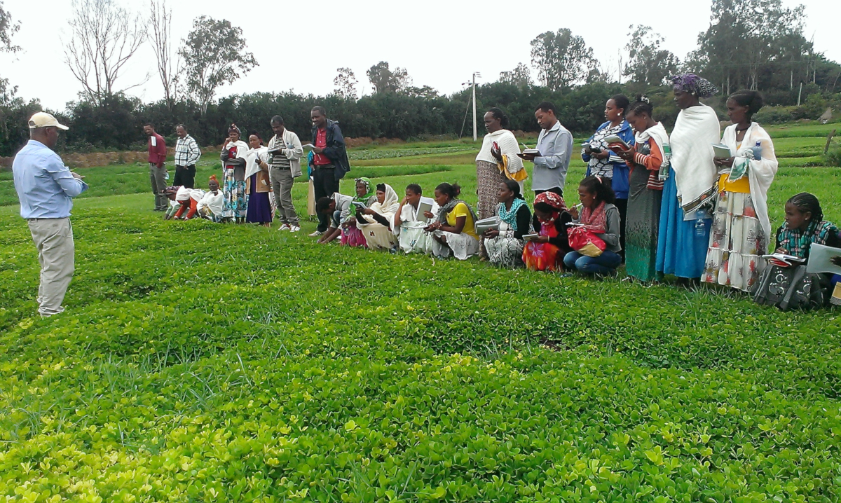 Enseignement des techniques agricoles aux petits exploitants en Ethiopie (crédits: Dereje Legesse / Livestock and Irrigation Value Chains for Ethiopian Smallholders LIVES / Flickr Creative Commons Attribution-NonCommercial 2.0 Generic (CC BY-NC 2.0))