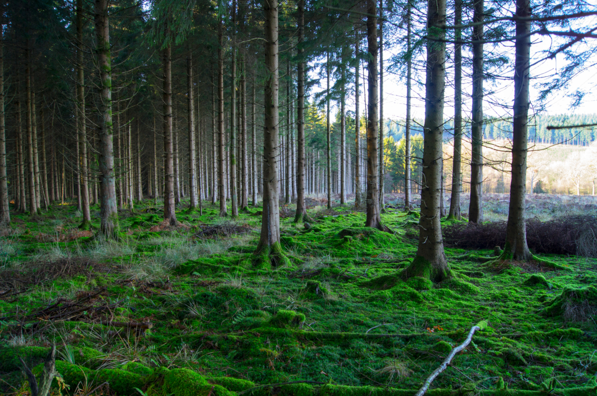 Forest (credits: Tim Gorman / Flickr Creative Commons Attribution-NoDerivs 2.0 Generic (CC BY-ND 2.0))