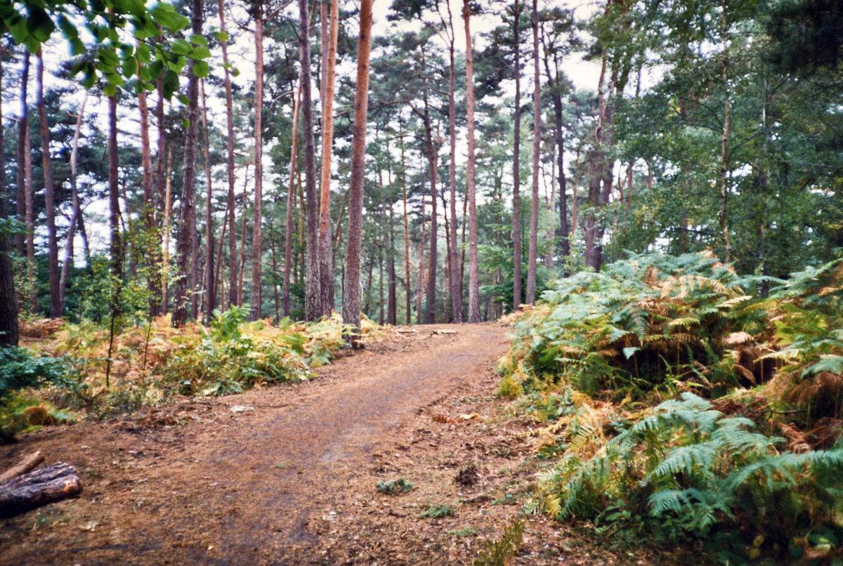La forêt de Rambouillet (crédits: mariejirousek / Flickr Creative Commons Attribution-NonCommercial-NoDerivs 2.0 Generic (CC BY-NC-ND 2.0))