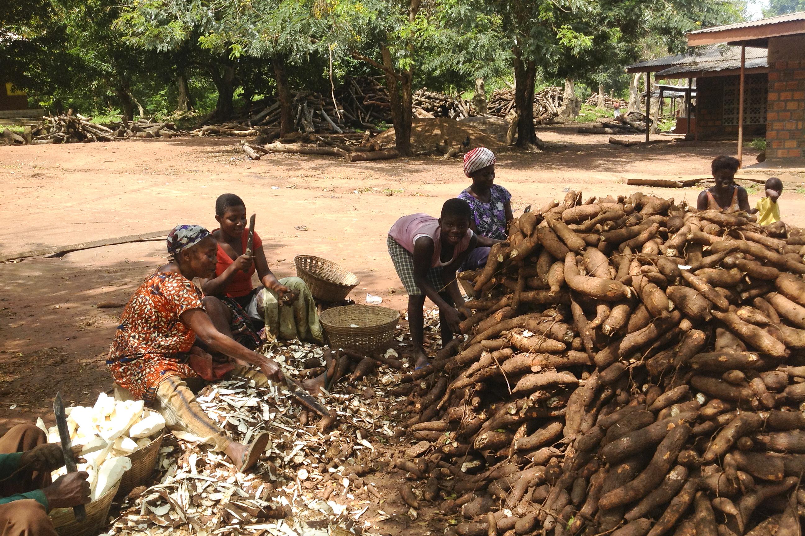 Les femmes sont en train de peler des maniocs (Crédit: ©IFPRI/Antony Chapoto / Flickr Creative Commons Attribution-NonCommercial-NoDerivs 2.0 Generic (CC BY-NC-ND 2.0))