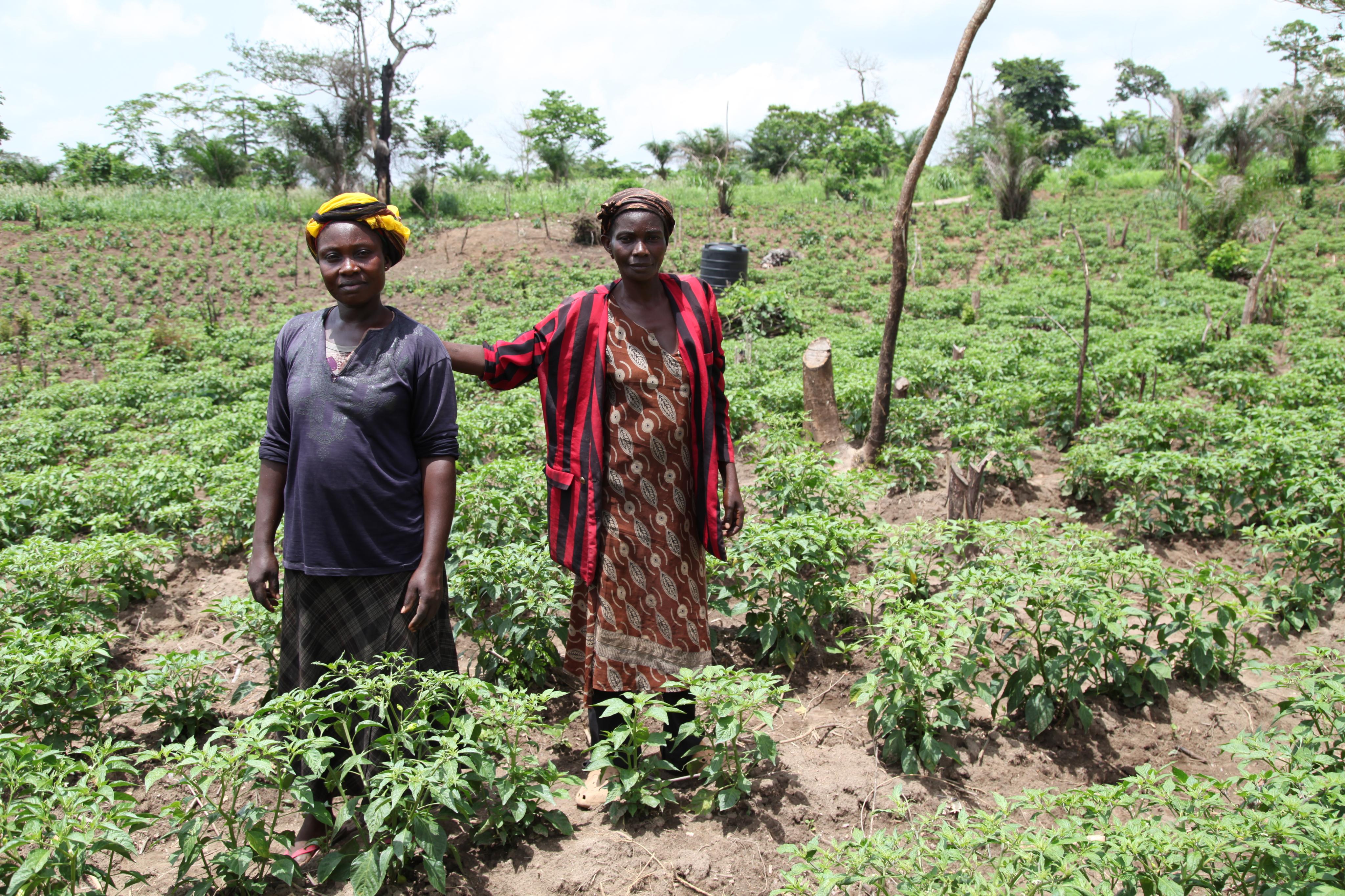 Les membres du projet d'agriculture biologique Abrono (ABOFAP) dans leur ferme de production de piments biologiques. Près de Techiman, Ghana (crédits: Global Justice Now / Flickr Creative Commons Attribution 2.0 Generic (CC BY 2.0))