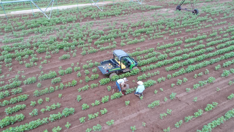 Formation des agriculteurs à la mise en œuvre et à l'utilisation de capteurs d'humidité dans la culture du coton (crédits: UGA CAES / Extension / Flickr Creative Commons Attribution - Pas d'Utilisation Commerciale 2.0 Générique (CC BY-NC 2.0))