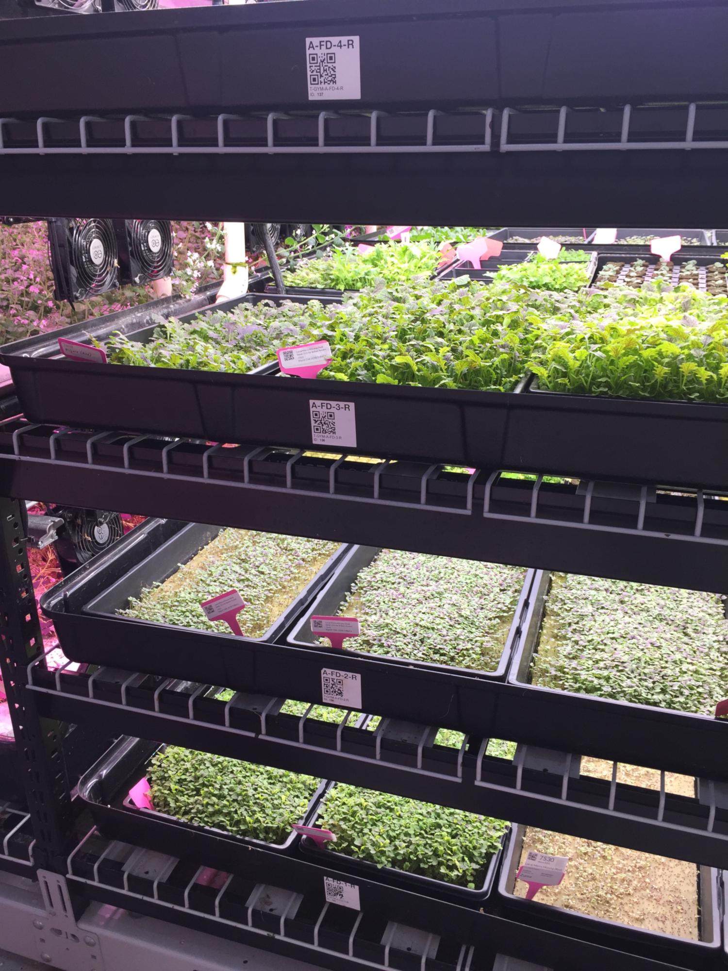 La ferme urbaine FarmOne à New York (crédits: ACME / Flickr Creative Commons Attribution - Pas d'Utilisation Commerciale 2.0 Générique (CC BY-NC 2.0))