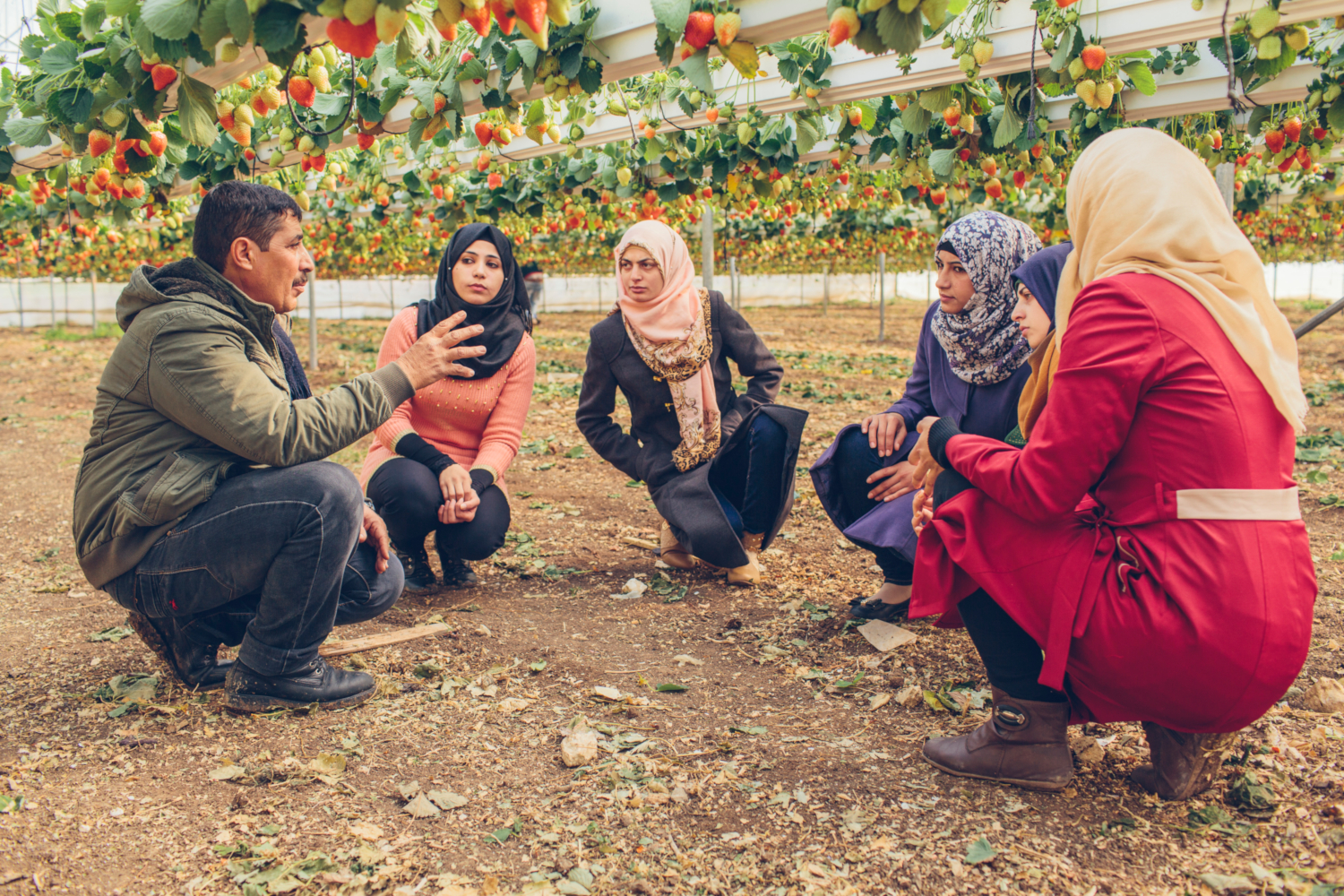 Teaching the next generation. Osamah Abu Al-Rub is one of only 20 strawberry farmers in the West Bank. The USAID Compete Project - which helps Palestinian farmers introduce a range of new crops with high export potential - helped him transition half of his strawberry crop from an open field into modern hanging systems in greenhouses. A new computerized system controls and monitors water and fertilizer levels for optimal output. As a result, he is able to produce ten times more strawberries than those grown the traditional way. (credits: Bobby Neptune for USAID / Flickr Creative Commons Attribution-NonCommercial 2.0 Generic (CC BY-NC 2.0))