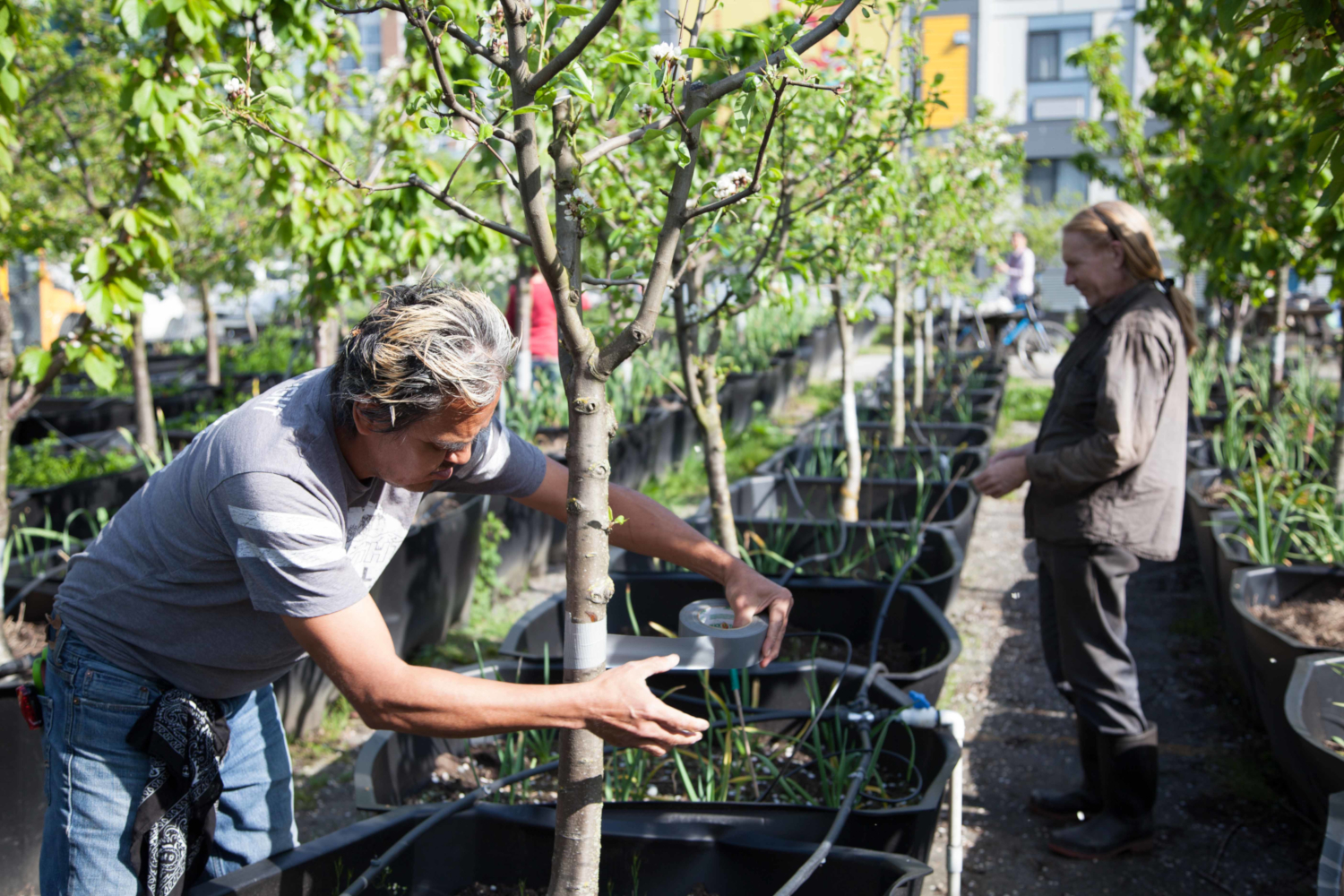 Vancouver's Sole Food Street Farms transforms vacant urban land into street farms that grow artisan quality fruits and vegetables, available at farmer's markets, local restaurants, and retail outlets. Sole Food's mission is to empower individuals with limited resources by providing jobs, agricultural training and inclusion in a supportive community of farmers and food lovers. (credits: Province of British Columbia / Flickr Creative Commons Attribution-NonCommercial-NoDerivs 2.0 Generic (CC BY-NC-ND 2.0))