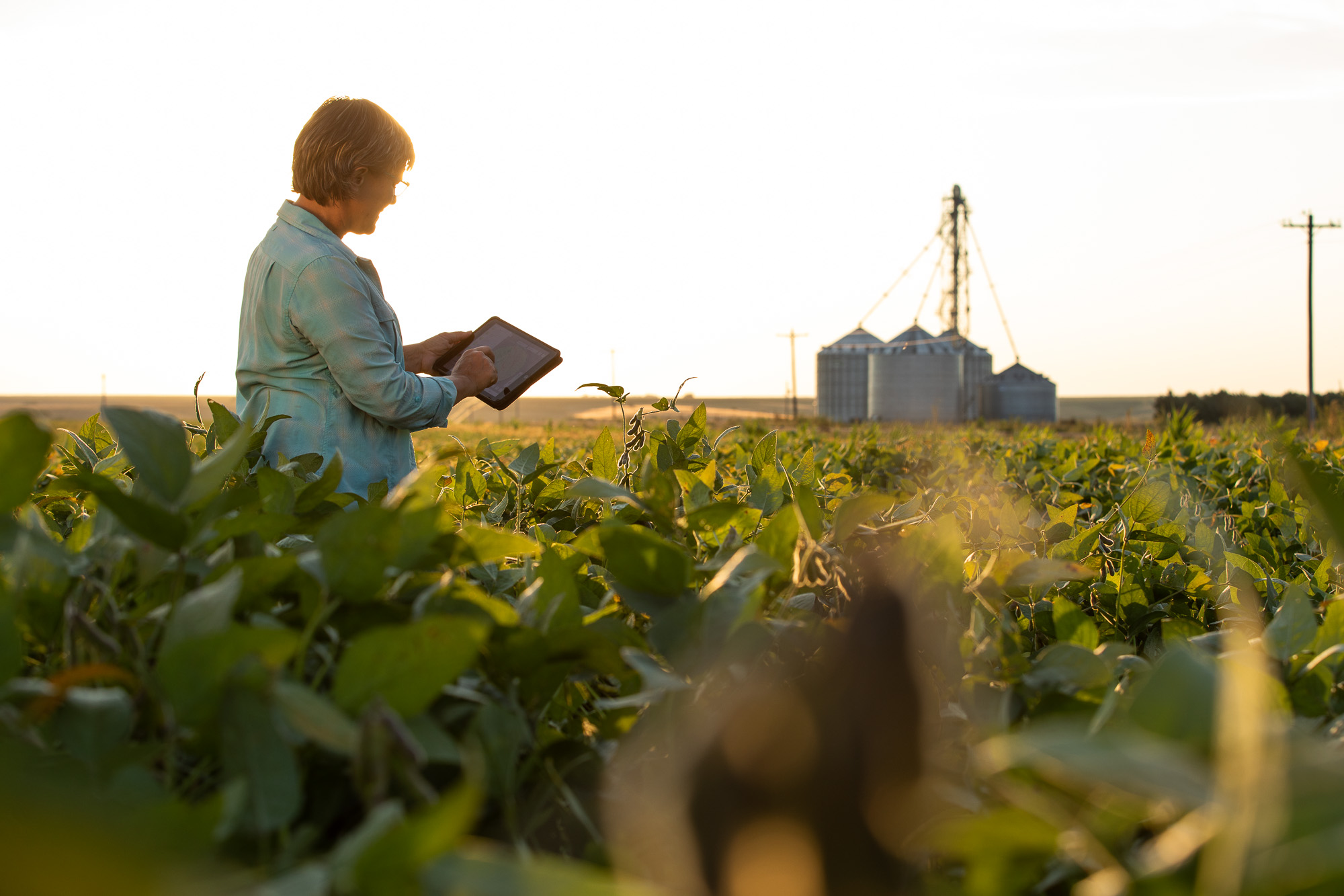 Farmer with Ipad (credits: The United Soybean Board / Flickr Creative Commons Attribution 2.0 Generic (CC BY 2.0))