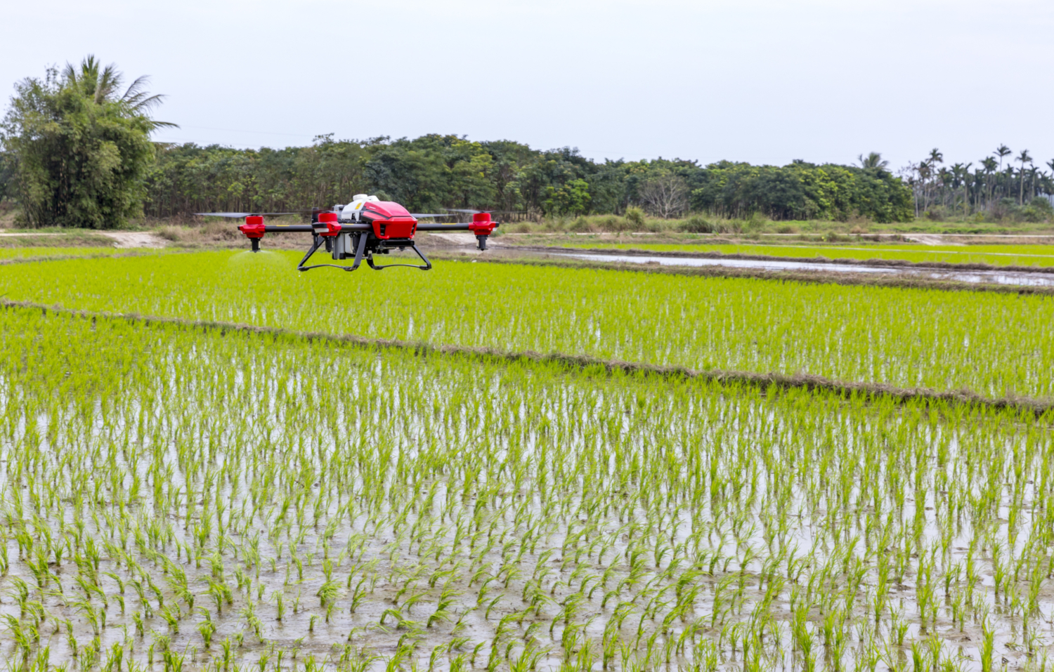 Drone flying over a rice field (Image by viya0414 from Pixabay)