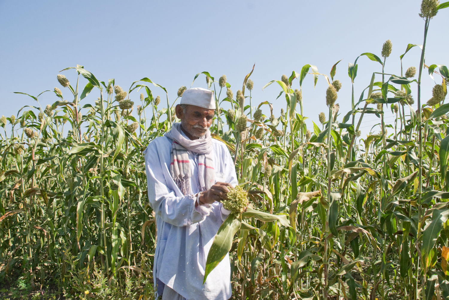A sorghum farmer in Maharashtra, India (credits: ICRISAT/PS Rao / Flickr Creative Commons Attribution-NonCommercial 2.0 Generic (CC BY-NC 2.0))