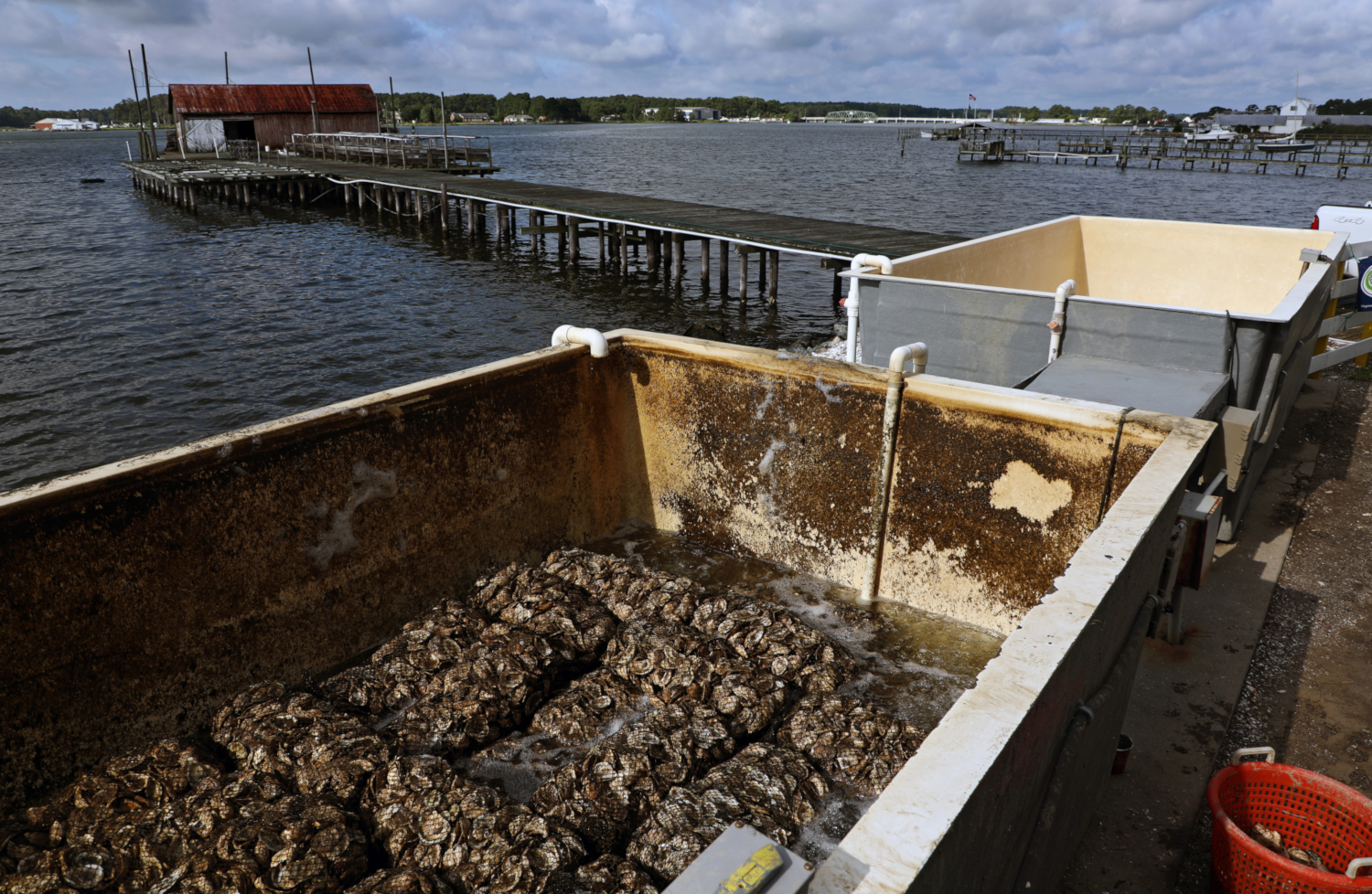 Virginia Oyster Shell Recycling Program (credits: Aileen Devlin | Virginia Sea Grant / Flickr Creative Commons Attribution-NoDerivs 2.0 Generic (CC BY-ND 2.0))