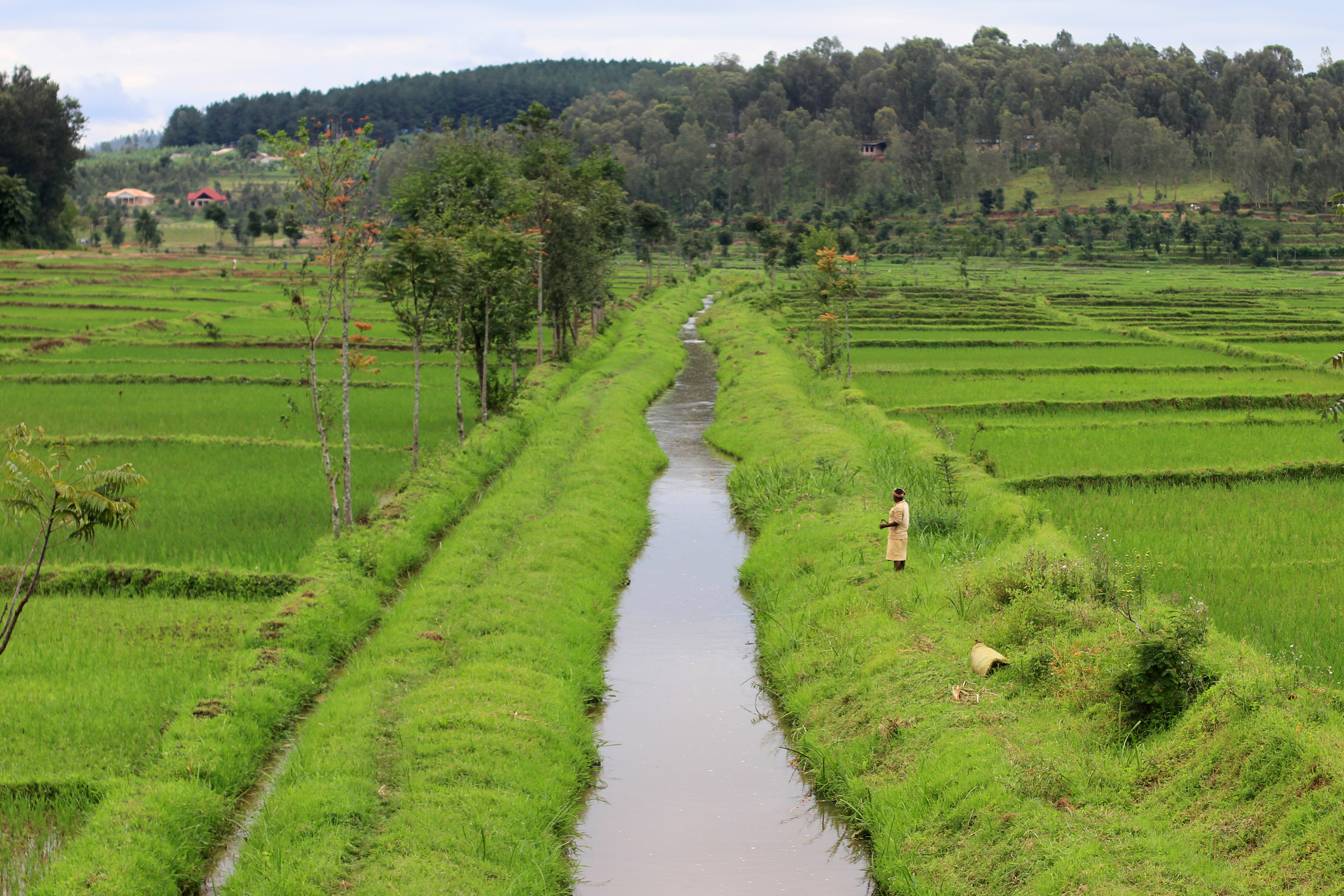 Rwanda Rice Paddies (credits: Adam Cohn / Flickr Creative Commons Attribution-NonCommercial-NoDerivs 2.0 Generic (CC BY-NC-ND 2.0))