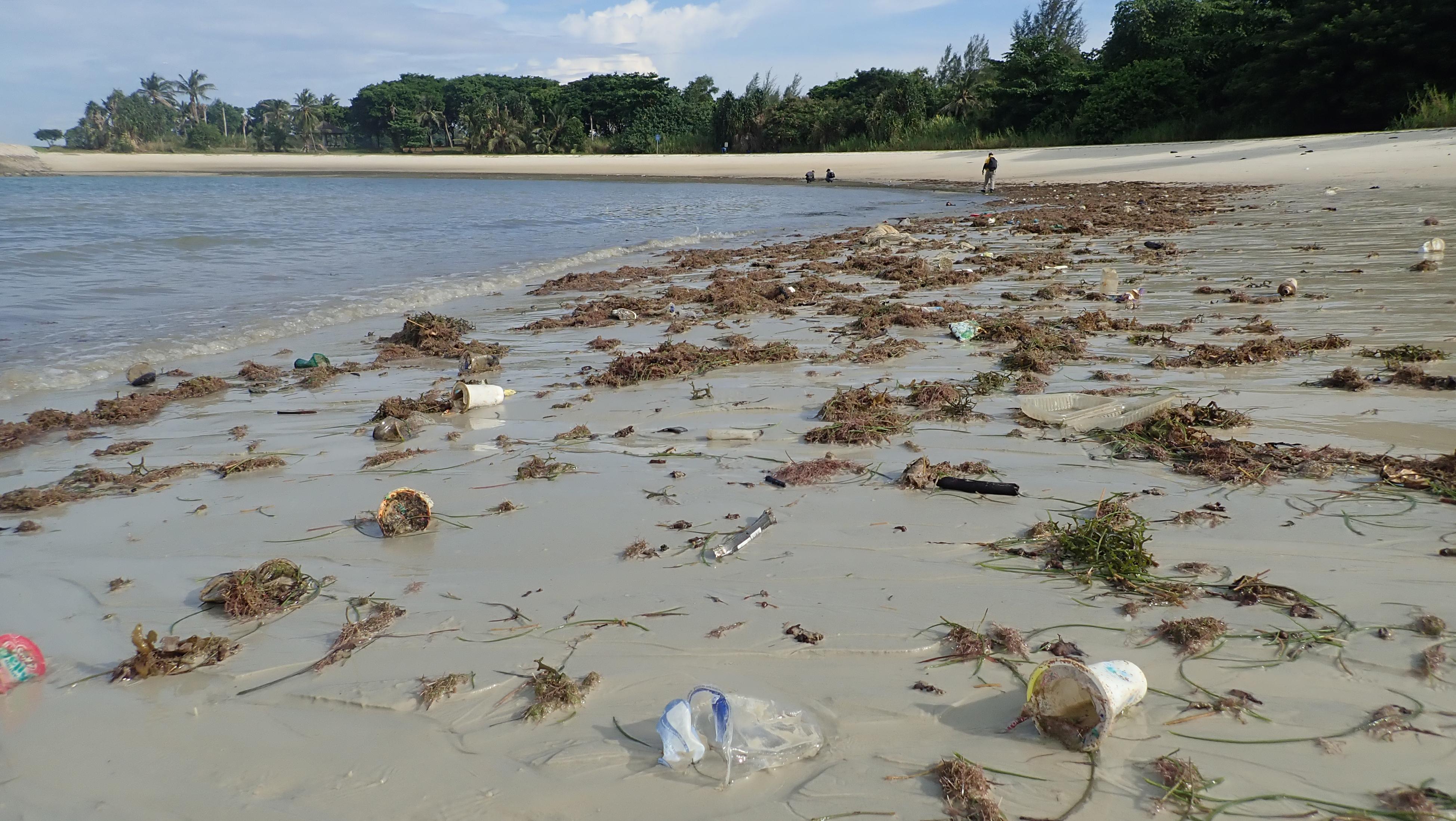 Litière sur le rivage à Seringat-Kias, Singapour (crédits: Ria Tan / Flickr Creative Commons Attribution - Pas d'Utilisation Commerciale - Pas de Modification 2.0 Générique (CC BY-NC-ND 2.0))