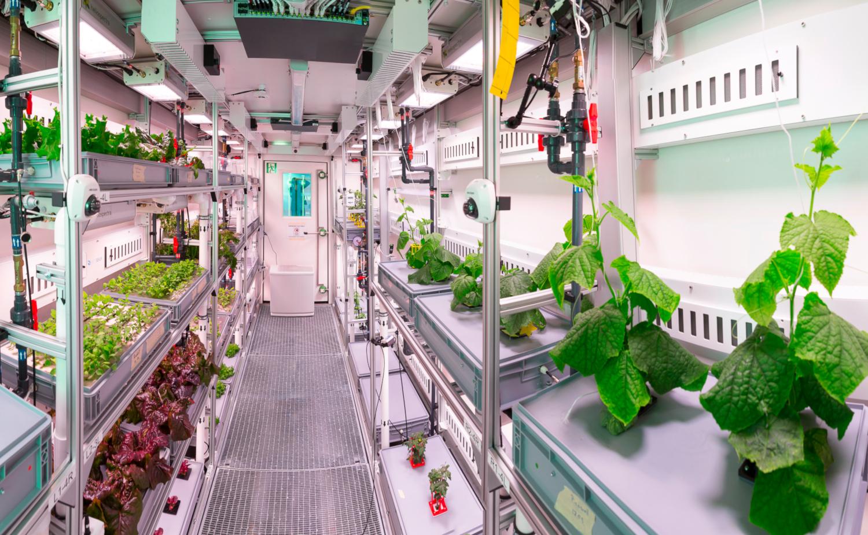 La culture des légumes à l'intérieur du serre Antarctic greenhouse EDEN-ISS (crédits: DLR German Aerospace Center / Flickr Creative Commons Attribution 3.0 Générique (CC BY 3.0))