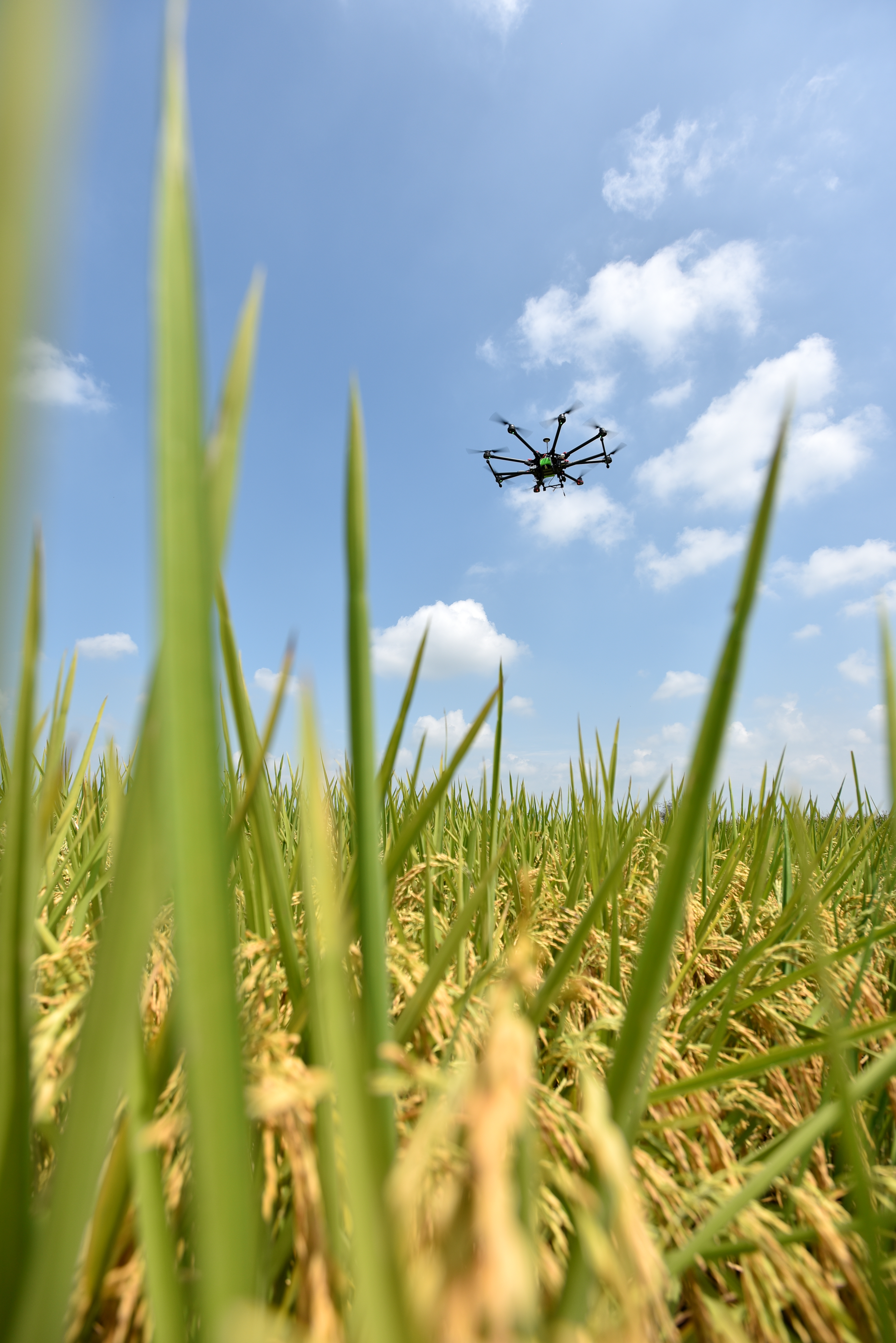 Drone pour surveiller les cultures de riz (crédits: ©2016CIAT /Neil Palmer / Flickr Creative Commons Attribution - Pas d'Utilisation Commerciale - Partage dans les Mêmes Conditions 2.0 Générique (CC BY-NC-SA 2.0))