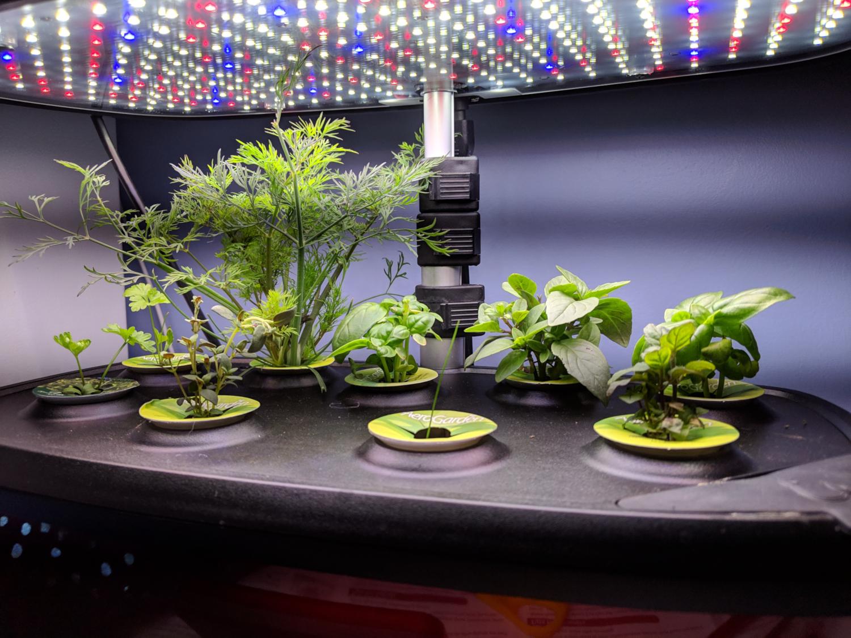 Herbes aérogardes (crédits: Ruth Hartnup / Flickr Creative Commons Attribution 2.0 Générique (CC BY 2.0))