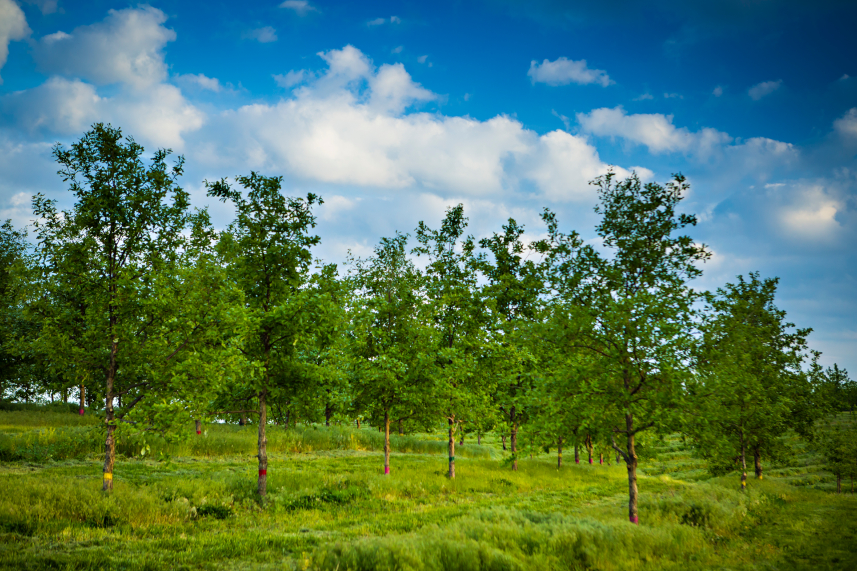 Parcelles de recherche agroforestière au HARC (crédits: Kyle Spradley | © 2014 - Curators of the University of Missouri / Flickr Creative Commons Attribution - Pas d'Utilisation Commerciale 2.0 Générique (CC BY-NC 2.0))
