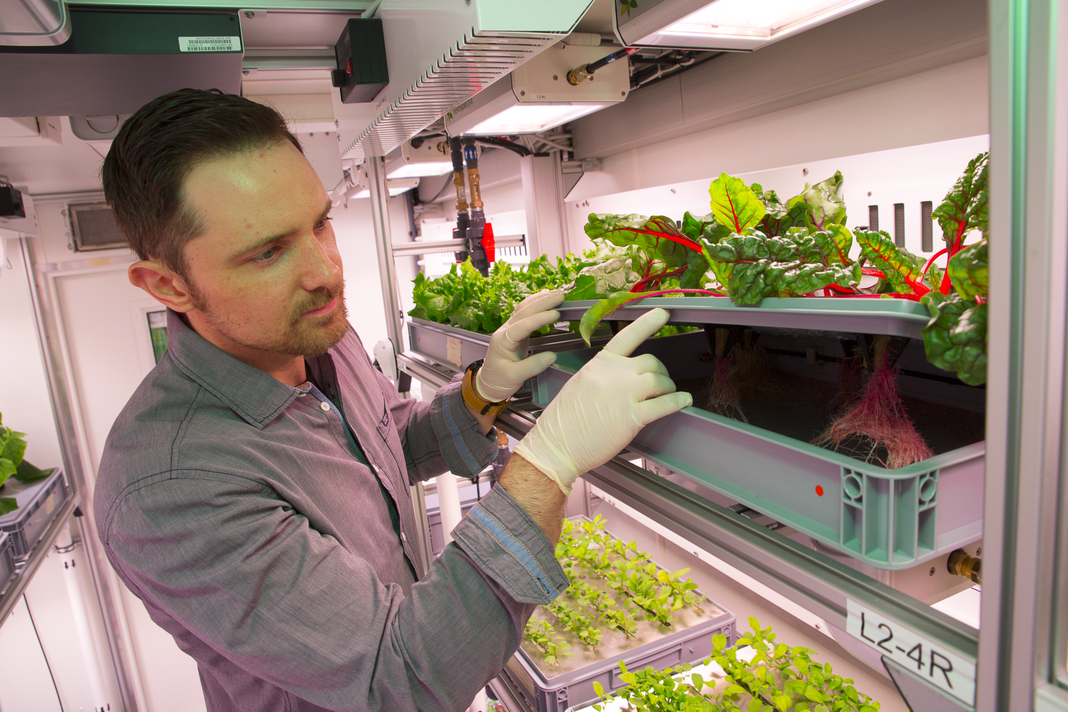 Matt Bamsey looks at the root of the chard plants in the the Antarctic greenhouse EDEN-ISS (credits: DLR German Aerospace Center / Flickr Creative Commons Attribution 2.0 Generic (CC BY 2.0))