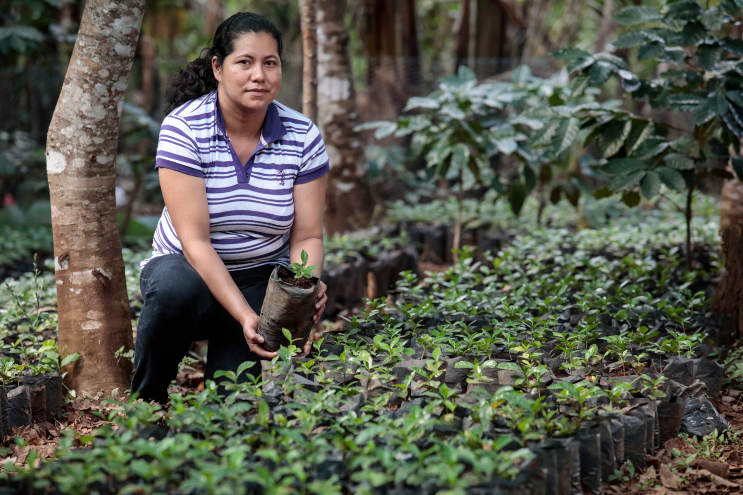 Oneida Gómez, 30, shows her coffee plant nursery she has planted with the help of Blue Harvest project in Canton Las Quebradas, San Simón municipality, Department of Morazán, El Salvador. Catholic Relief Services through local partner ACUGOLFO has worked with small producers with Blue Harvest project to conserve water in soil and to have better agricultural practices in order to get higher yields. (credits: Maren Barbee / Public domain)