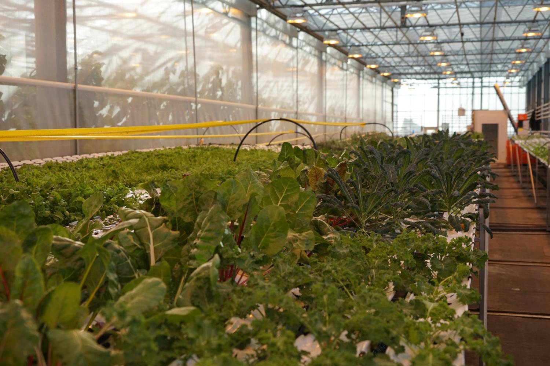 La ferme urbaine Den Haag (crédits: ACME / Flickr Creative Commons Attribution - Pas d'Utilisation Commerciale 2.0 Générique (CC BY-NC 2.0))