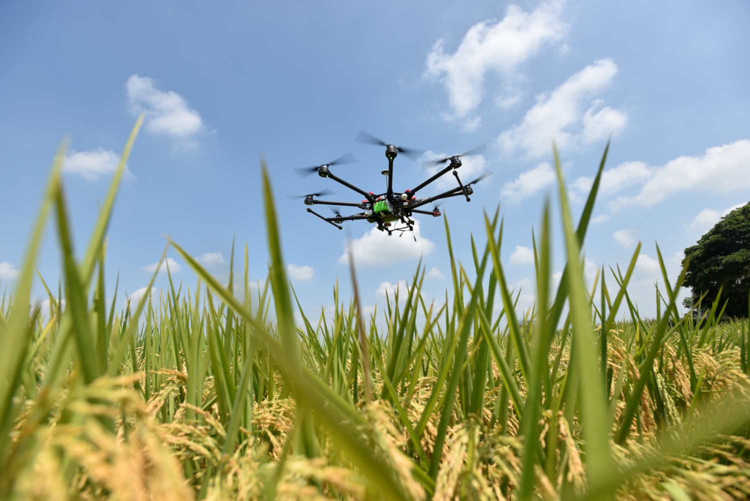 The use of drones for monitoring rice crops (credits: ©2016CIAT / Neil Palmer / Flickr Creative Commons Attribution-NonCommercial-ShareAlike 2.0 Generic (CC BY-NC-SA 2.0))