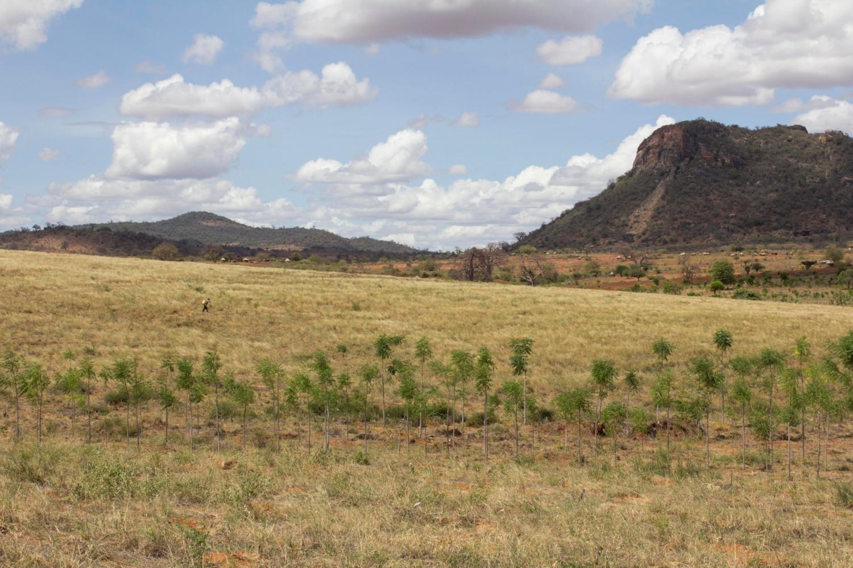 Premier phase des efforts de reboisement dans la province orientale du Kenya (crédits: Flore de Preneuf / World Bank / Flickr Creative Commons Attribution - Pas d'Utilisation Commerciale - Pas de Modification 2.0 Générique (CC BY-NC-ND 2.0))