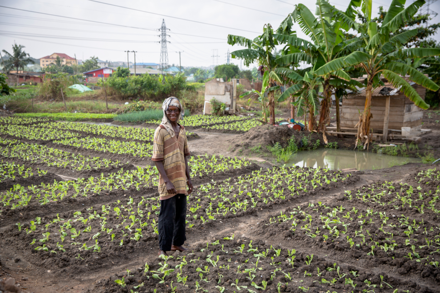 Wastewater irrigation in urban agriculture. Ghana. (credits: IWMI Flickr Photos / Flickr Creative Commons Attribution-NonCommercial-NoDerivs 2.0 Generic (CC BY-NC-ND 2.0))