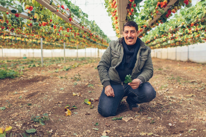 Osamah Abu Al-Rub, un des 20 producteurs de fraises en Cisjordanie (crédits: Bobby Neptune for USAID / Flickr Creative Commons Attribution - Pas d'Utilisation Commerciale 2.0 Générique (CC BY-NC 2.0))